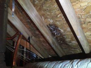 Katy Home Inspection Water Leak